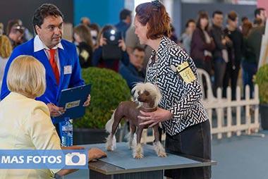 Exposición internacional canina de Badajoz