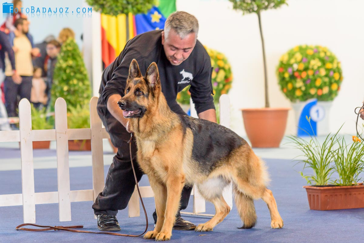 35 Exposición Internacional Canina Badajoz 2016
