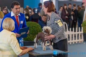 exposición internacional canina 2016 fotos